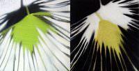 Gegenlicht, Kohle, Acryl auf Leinwand, 30x 60 cm